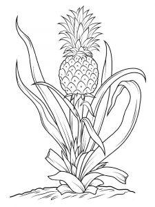 raskraski-frukty-ananas-12