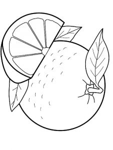 raskraski-frukty-apelsin-6