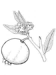 raskraski-frukty-granat-5