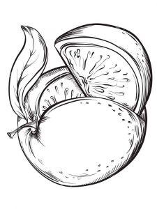 raskraski-frukty-greipfrut-1