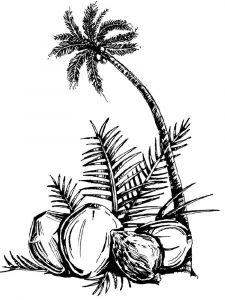 raskraski-frukty-kokos-2