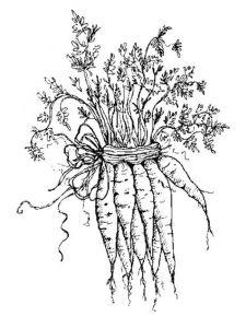 raskraski-morkovka-10