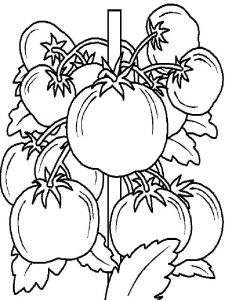 raskraski-pomidor-13