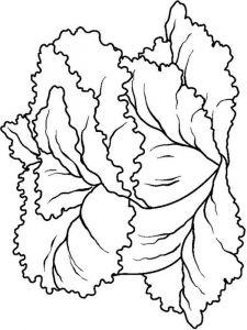 raskraski-salat-2