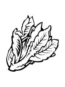raskraski-salat-9