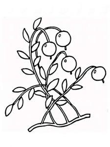 raskraski-yagoda-brusnika-1