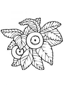raskraski-yagoda-chernika-7