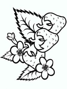 raskraski-yagoda-klubnika-13