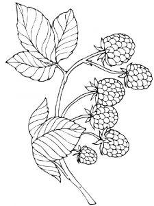 raskraski-yagoda-malina-14