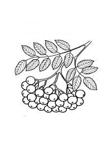 raskraski-yagoda-ryabina-10