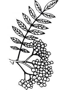 raskraski-yagoda-ryabina-12