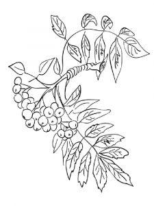 raskraski-yagoda-ryabina-7