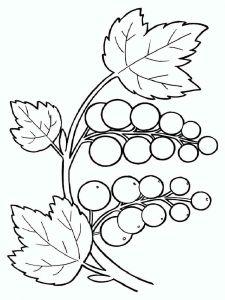 raskraski-yagoda-smorodina-2