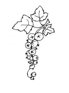 raskraski-yagoda-smorodina-4