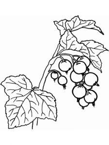 raskraski-yagoda-smorodina-6