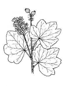 raskraski-yagoda-smorodina-7