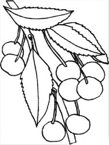 raskraski-yagoda-vishnya-11