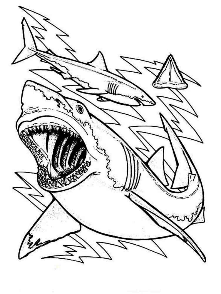 раскраски акула скачать и распечатать раскраски акула