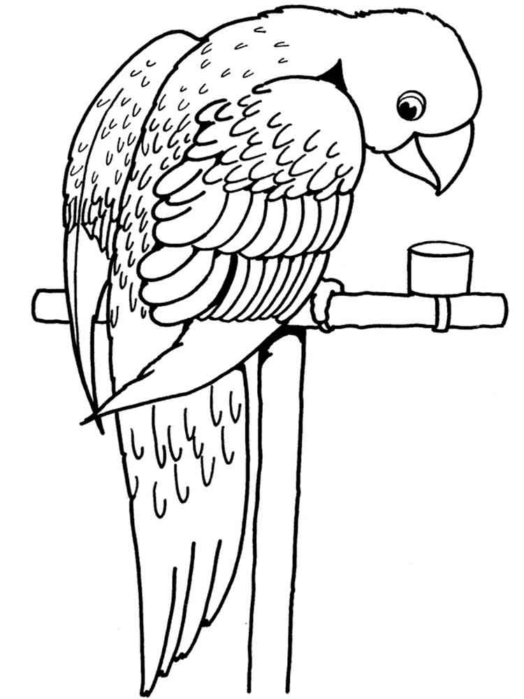 раскраски попугай скачать и распечатать раскраски попугай