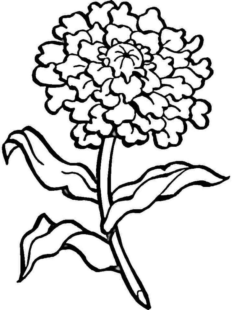 цветы гвоздика картинка раскраска три года