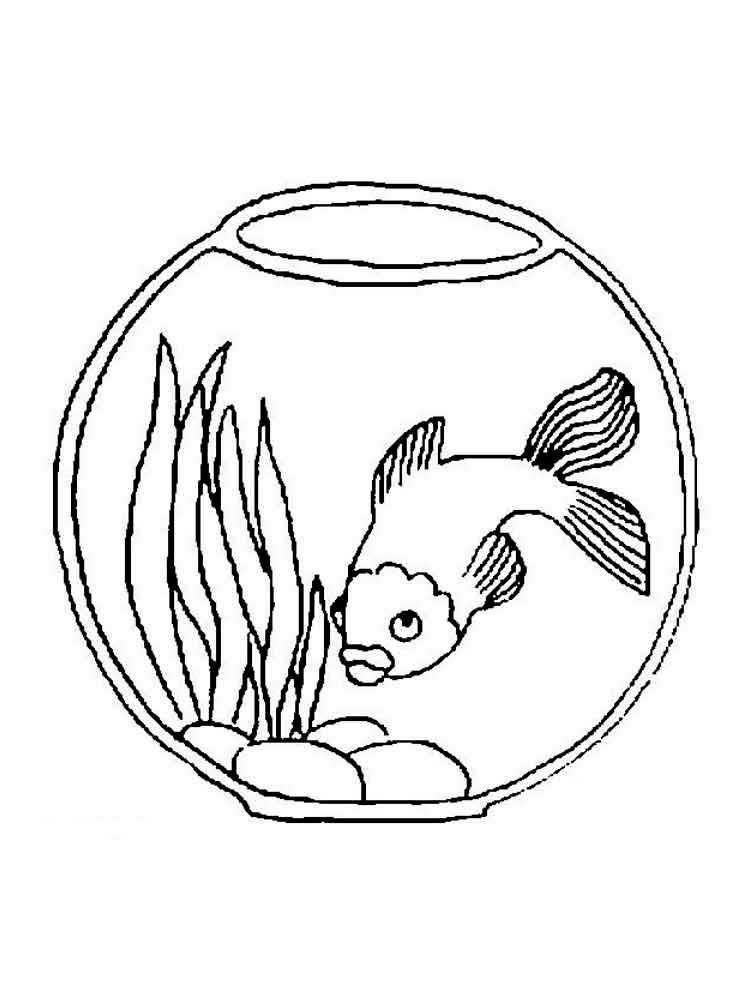 ситуации рисунок аквариум с рыбками и водорослями куртку каракуля