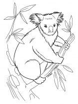 raskraska-Koala-1