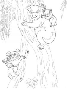 raskraska-Koala-10