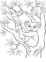 raskraska-Koala-13