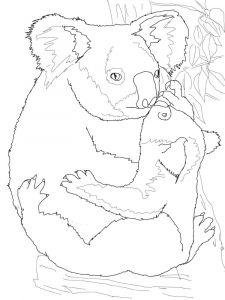 raskraska-Koala-15