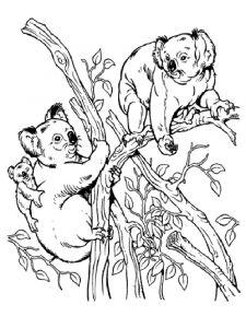 raskraska-Koala-2
