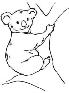 raskraska-Koala-7