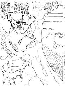 raskraska-Koala-8