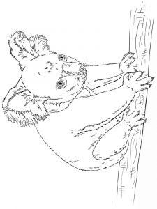 raskraska-Koala-9