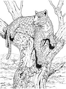 raskraska-Leopard-4
