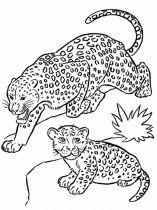 raskraska-Leopard-5
