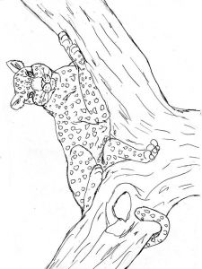 raskraska-Leopard-6