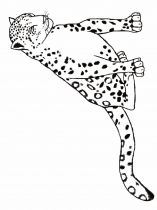 raskraska-Leopard-8