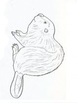 raskraska-bober-3