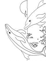 raskraska-delfin-5