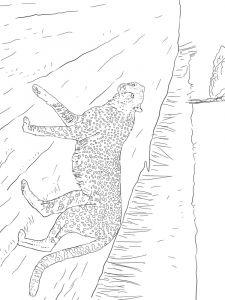 raskraska-gepard-7