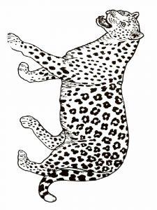 raskraska-gepard-9