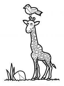 raskraska-giraffe-1
