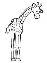raskraska-giraffe-12