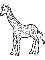 raskraska-giraffe-13
