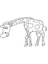 raskraska-giraffe-15