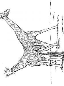 raskraska-giraffe-2