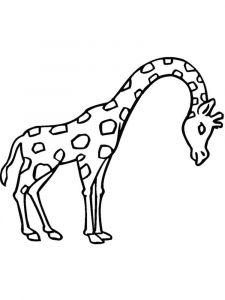 raskraska-giraffe-3