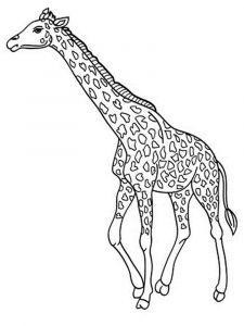 raskraska-giraffe-8
