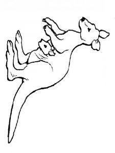 raskraska-kenguru-1