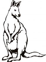 raskraska-kenguru-12